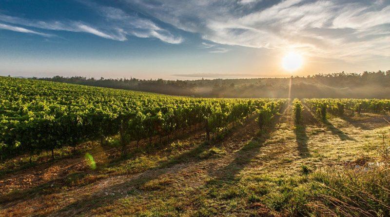 mejores viñedos de Chile